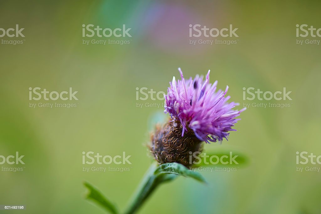 Macro shot of purple plant flower photo libre de droits