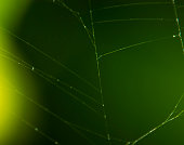 Spiderweb background, bright yellow sun light, network of spider, spring season, beauty of wild nature concept