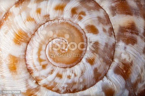 Macro shot of a surface of a tiny seashell