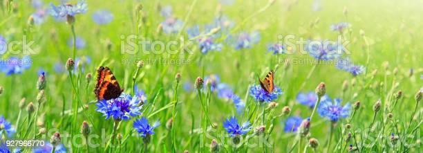 Macro shot on two butterflies and flowers picture id927966770?b=1&k=6&m=927966770&s=612x612&h=gr ha hcangd1eves wiz2b6qyyqhzjs9kzl54zjmwa=