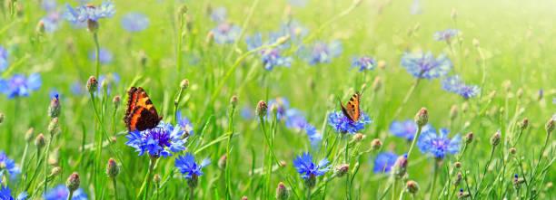 Macro shot on two butterflies and flowers picture id927966770?b=1&k=6&m=927966770&s=612x612&w=0&h= dpuyelxtve2xak77fllw wkido0sgyr9u0cqhqjtju=