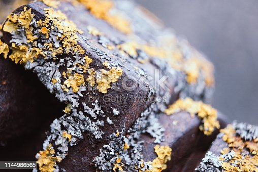 Macro texture concrete surface with yellow lichen. Texture of old gray reinforced concrete surface with moss.  Macro photo