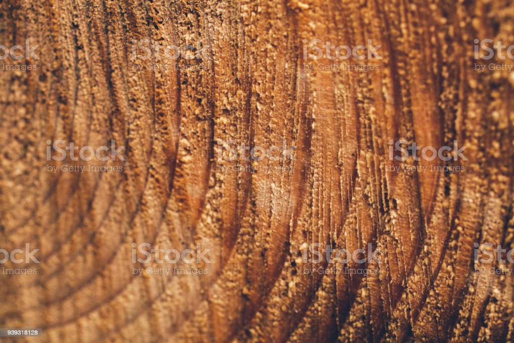 Macro texture of cut tree trunk. Stump of pine tree. Wood texture and...
