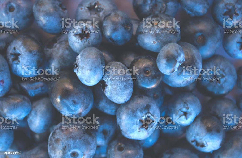 Macro texture of fresh and ripe bluberries. stock photo