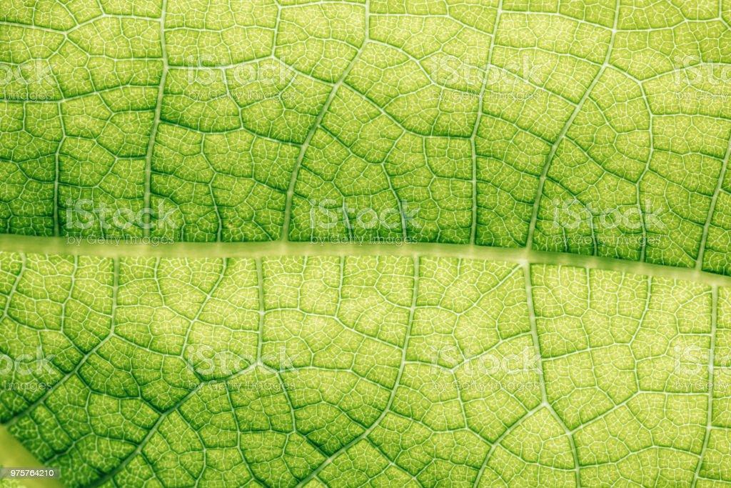 Makro-Textur von grünen florale Blatt - Lizenzfrei Blatt - Pflanzenbestandteile Stock-Foto