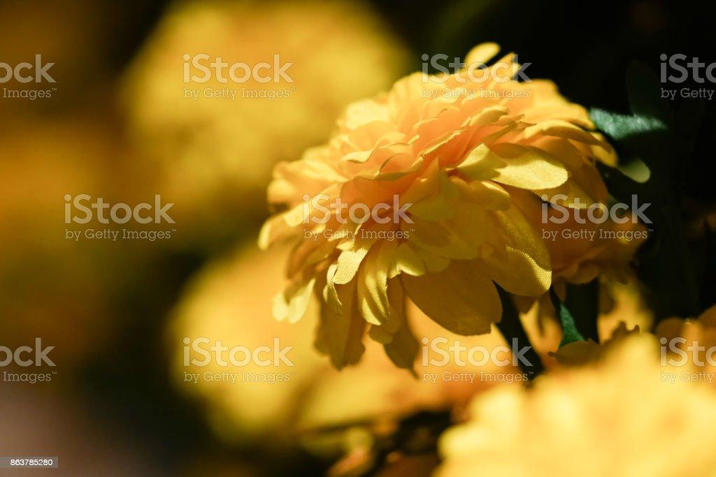Macro Texture of Marigold plastic. stock photo