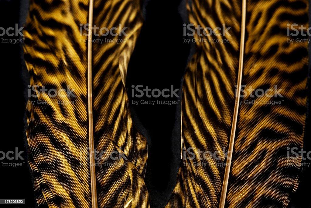 Macro Tiger Feathers royalty-free stock photo