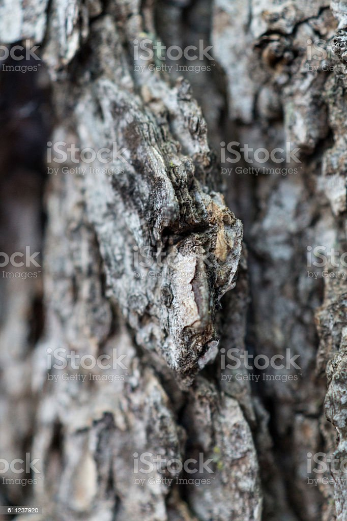 macro - tree bark royalty-free stock photo