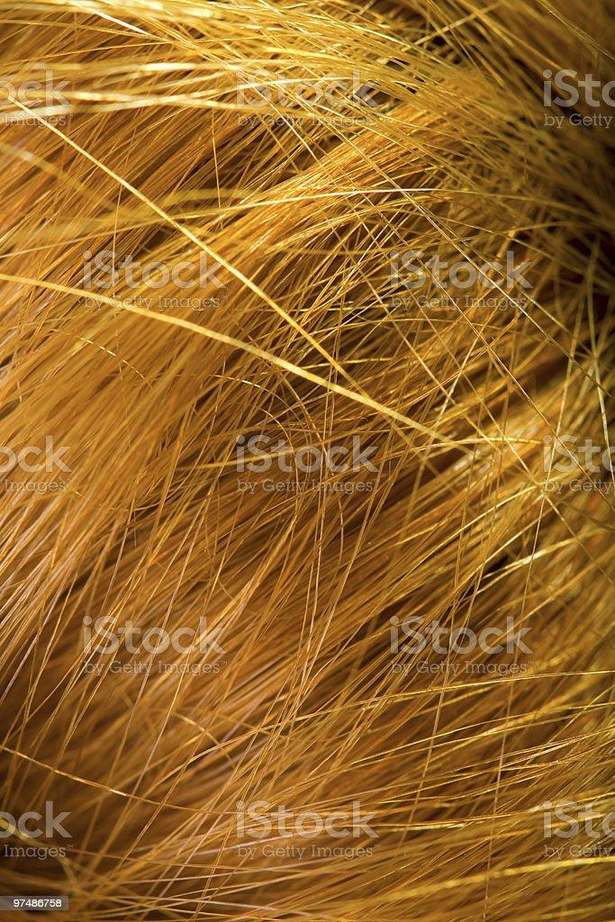 Macro view of human female hair royalty-free stock photo