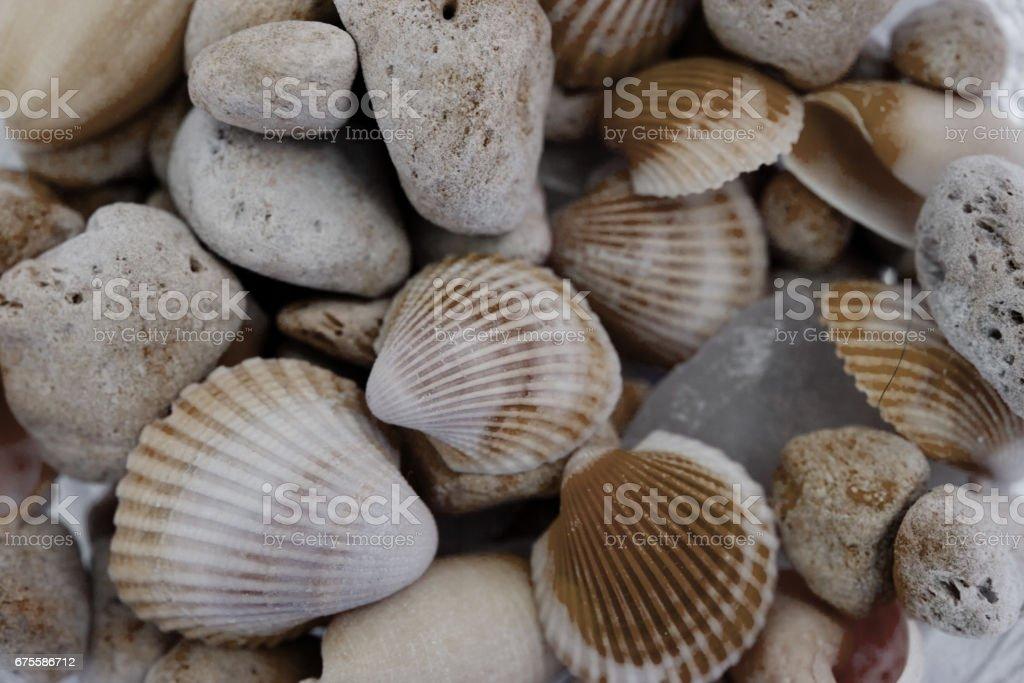 Macro view of seashells. Seashell background. foto de stock royalty-free