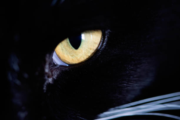 Macro view on cat's eye. stock photo