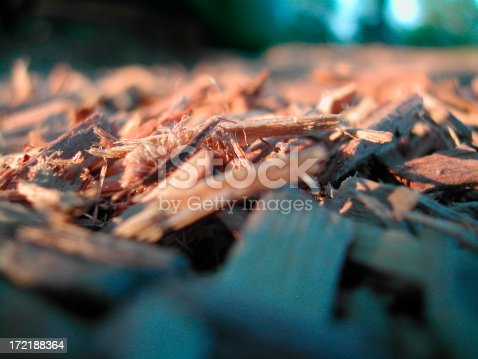 Up close and personal with Playground woodchips in evening light