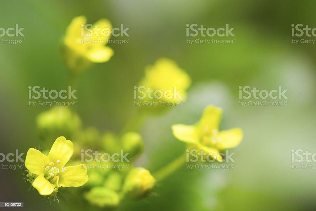 macro yellow flower royalty-free stock photo