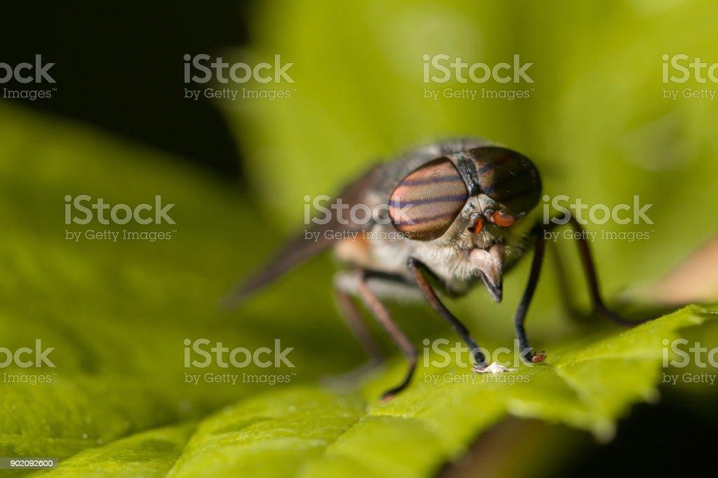Макромир. Большая муха и большой зелёный клоп. Дикая природа....