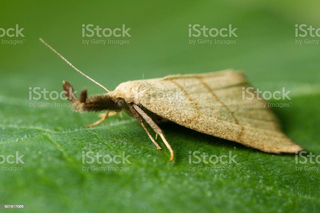 Макромир. Красивая бабочка греется на солнце. Дикая природа....