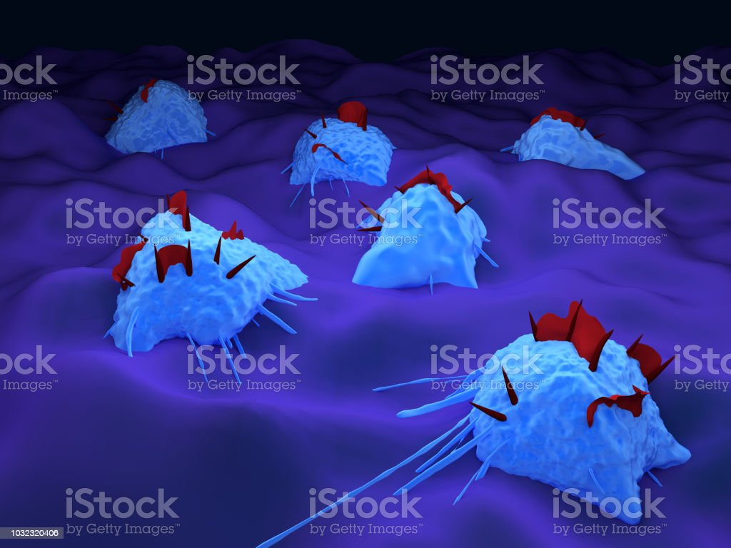 Macrophage immune cells stock photo