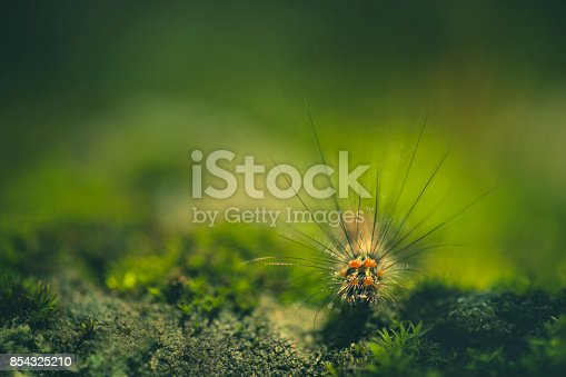 Outdoor macro-photography of caterpillar in nature. No people, selective focus with copy space.