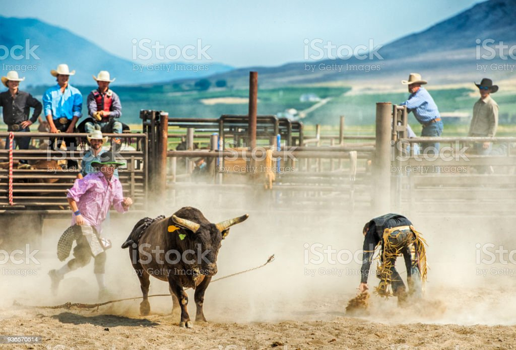 Mad Bull And Ejected Cowboy Mixed With Lots of Dust With Friends and Competitors Looking On As He Scrambles Away From The Large Beast stock photo
