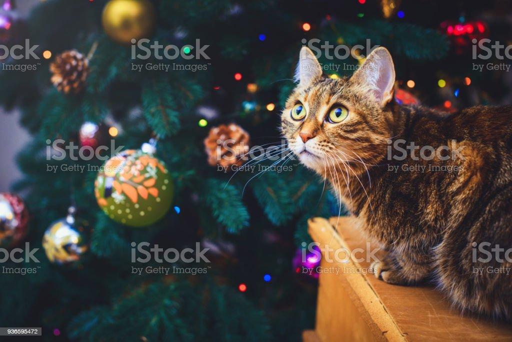 Gekke Kat Thuis Zit Op Een Houten Doos Mooie Kerstmis Achtergrond
