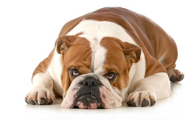 mad chien - Photo