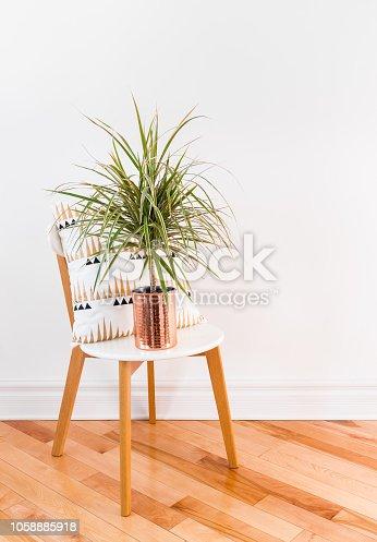 Madagascar dragon tree in a copper pot, on a stylish chair. Modern home decor.