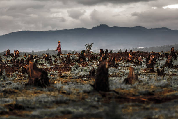 Madagascar Stumps on the valley caused by deforestation and slash and burn type of agriculture of Madagascar deforestation stock pictures, royalty-free photos & images