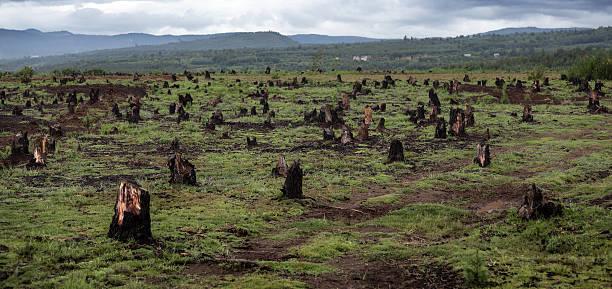 madagascar - deforestacion fotografías e imágenes de stock