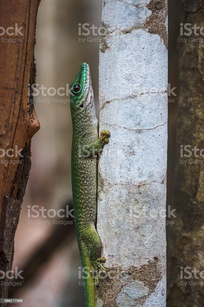 Madagascar foto royalty-free