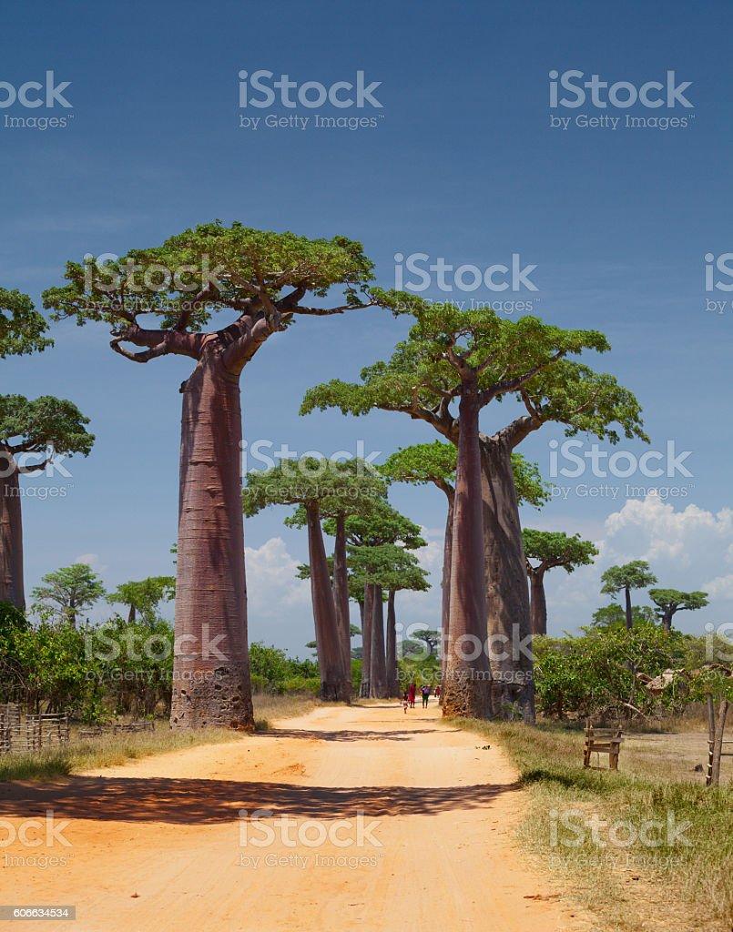 Madagascar - foto de stock