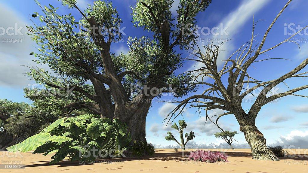 Madagascarian vegetation royalty-free stock photo