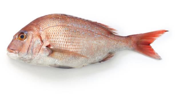 Madai, Japanese red sea bream