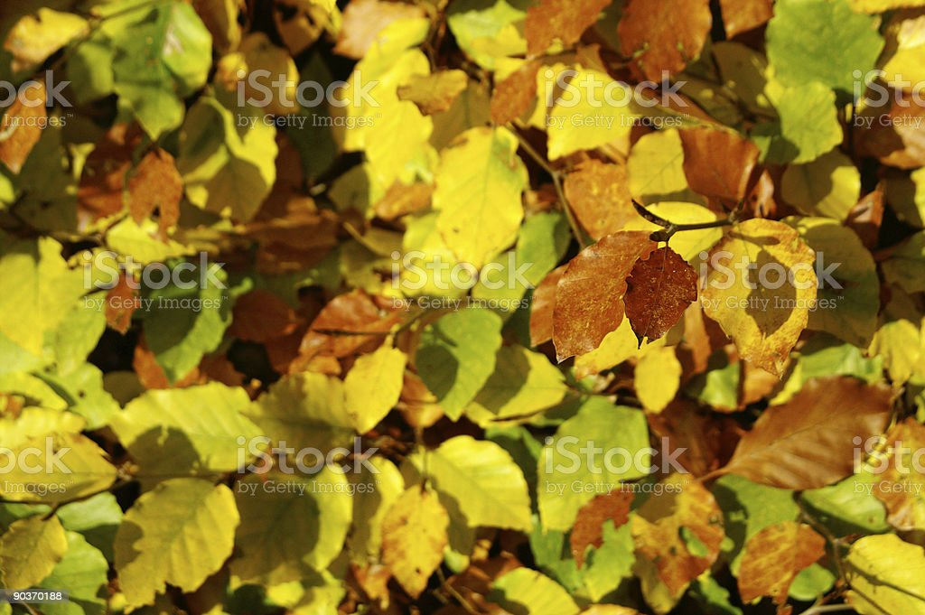 Made of beechwood sheets in different fall colors stock photo