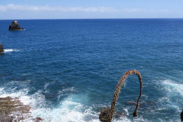 madeira island funchal portugal - ronaldo imagens e fotografias de stock