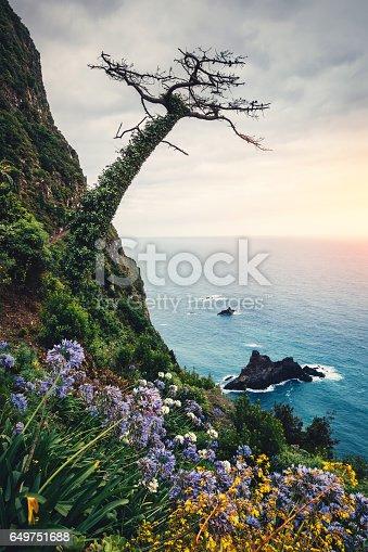 Beautiful landscape on north coast of Madeira island (Arco de Sao Jorge) with rocks, flowers and trees.
