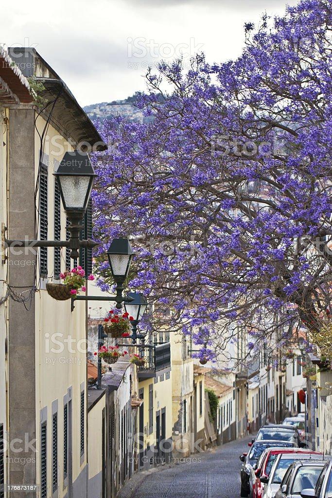 Ilhas da Madeira foto de stock royalty-free