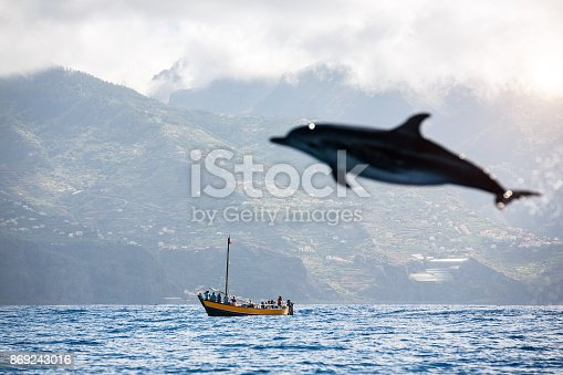 Dolphin jumping from the sea (Atlantic Ocean, Madeira Island). People in the distance are watching the animals.