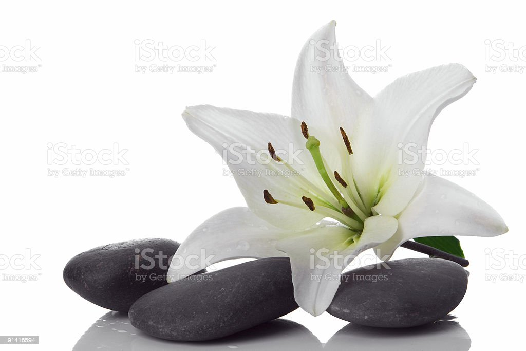 madonna lily and spa stone royalty-free stock photo
