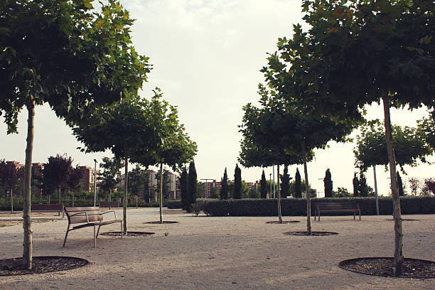 Madrid park with tree lines and bech on left side stock photo