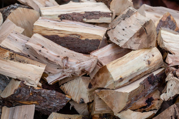 Madrone Firewood Logs Split for drying stock photo
