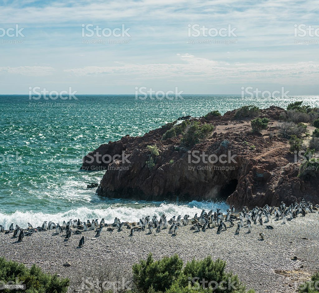 Magellanic Penguins on the sea shore stock photo