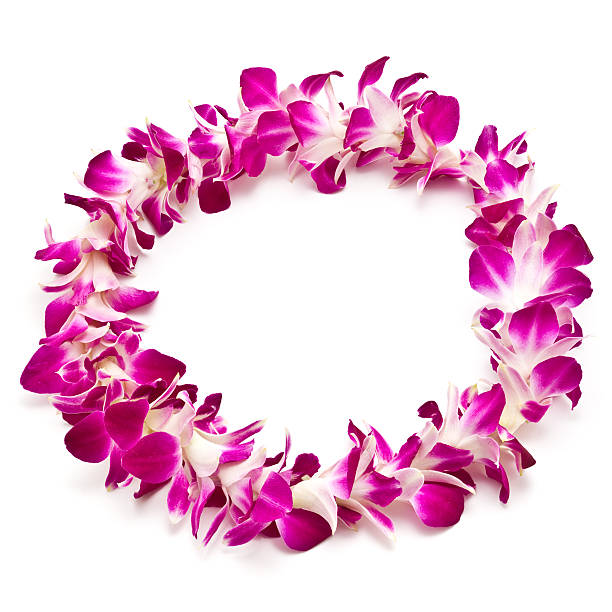 Magenta and white lei flower garland isolated on white stock photo