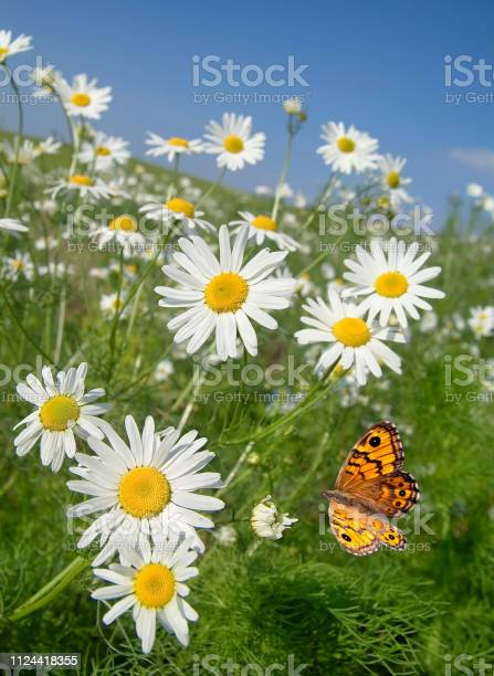 Photo of Mageritenfels with butterfly in summer