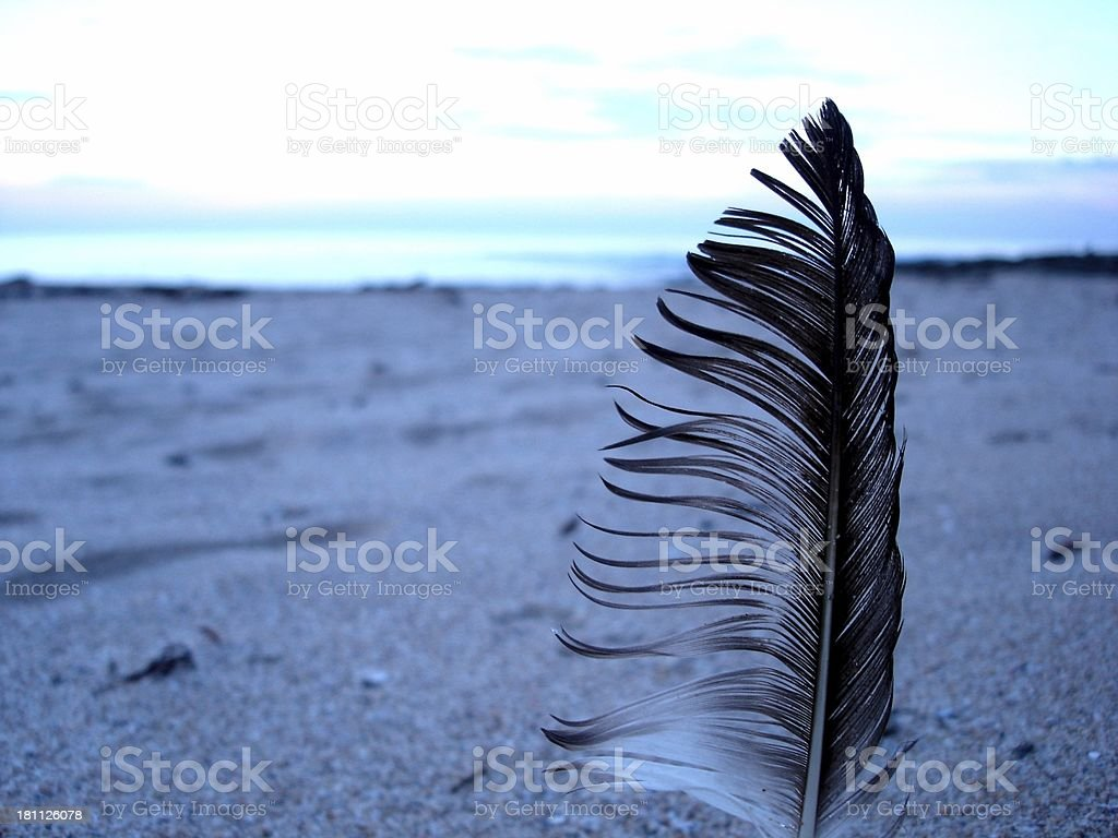 Maggie Feather royalty-free stock photo