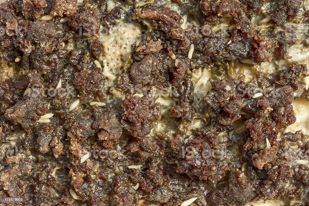 Maggots Eating on Rotten Meat stock photo