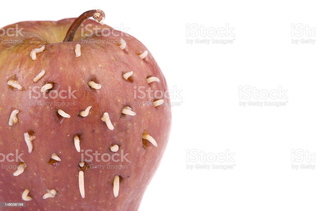 Maggots sur rotten pomme - Photo