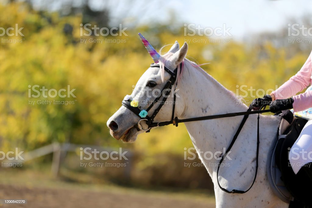 Magic Background With Realistic White Colored Unicorn Horse Stock Photo Download Image Now Istock