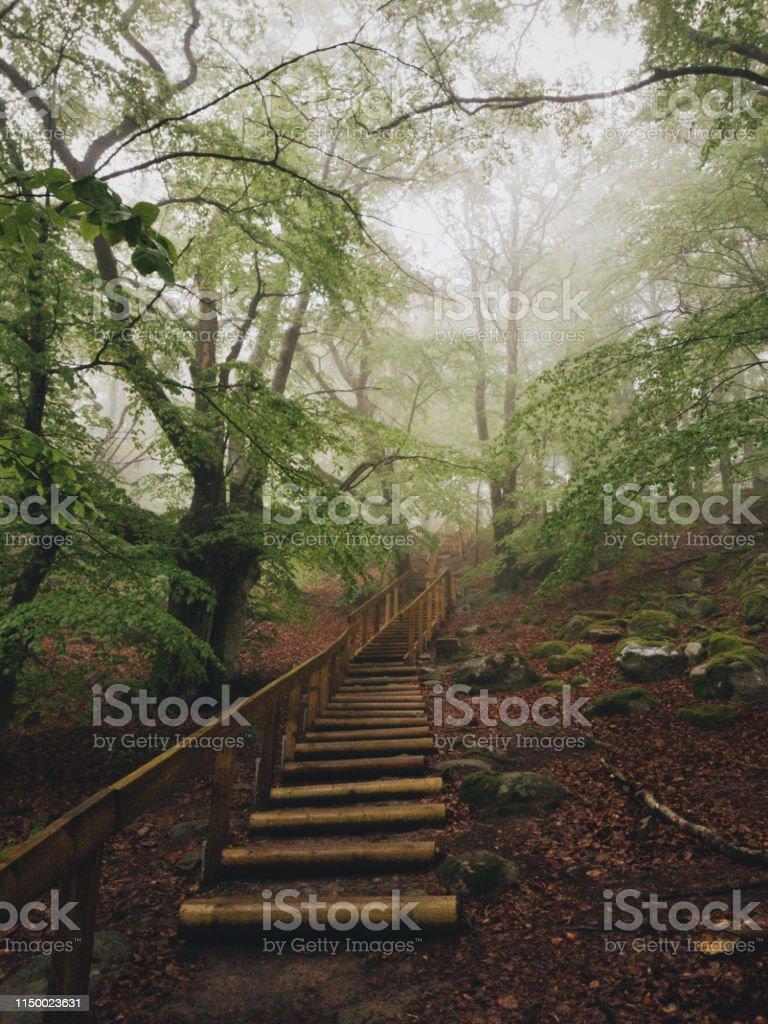 Magisk bok träd skog i nationalparken Stens huvud en dimmig dag med gamla träd - Royaltyfri Berg Bildbanksbilder