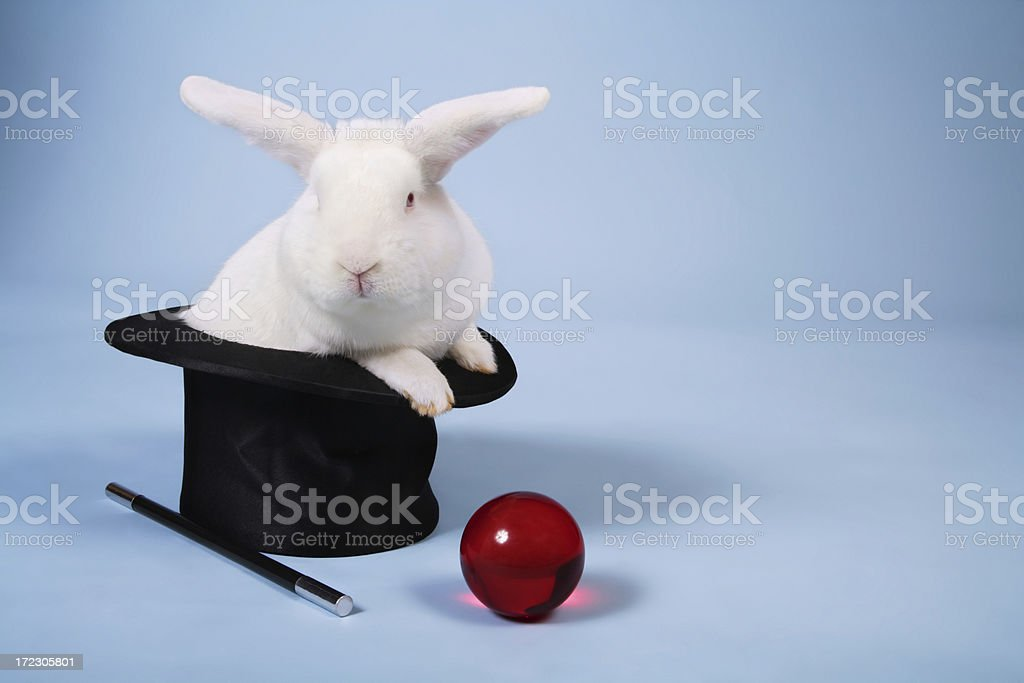 Magic Bunny Rabbit royalty-free stock photo