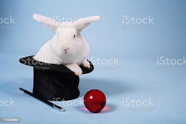 Magic bunny rabbit picture id172305801?b=1&k=6&m=172305801&s=612x612&h=noh37ctujsoxkkwwso75dv1zhgu3kn7rukz6nfkys5c=