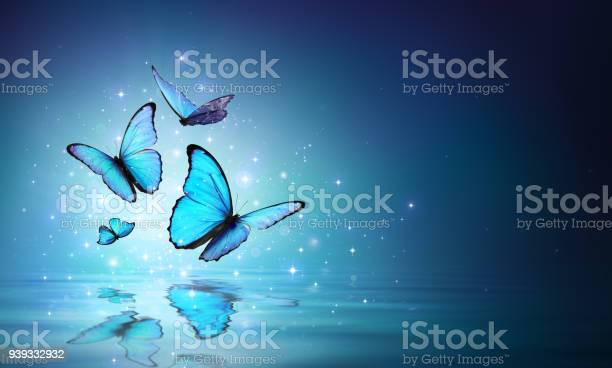 Magic butterflies on water picture id939332932?b=1&k=6&m=939332932&s=612x612&h=idl glgnp b4ki9msflm0mzyor0 ci4lkx9rargamve=